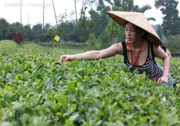 Китайский чай «Хуаншань Маофэн» 黄山毛峰
